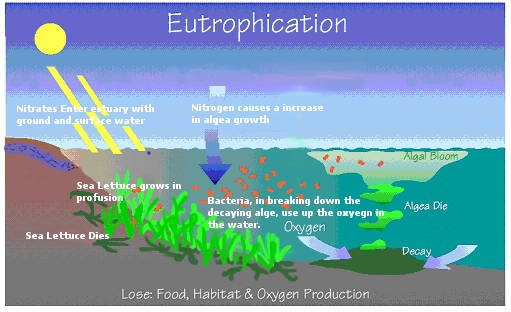 Nitrates and Their Effect on Water Quality – A Quick Study ...